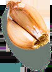 Gousses d'ail