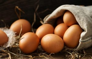 œufs de poules élevée en plein air